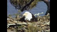 BRIeaglecam1: March 25, 2011_442pm