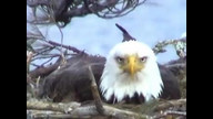 BRIeaglecam1: March 25, 2011_0452pm