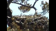 BRIeaglecam1: March 26, 2011_0937