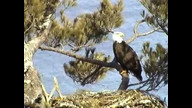 Nextera Maine Eagle Cam1: April 2, 2011
