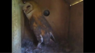 The Owl Box 08/23/11 02:21PM