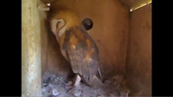 The Owl Box 08/24/11 11:47AM