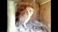 The Owl Box 08/31/11 09:45AM