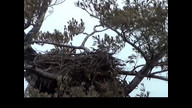 Next Era Eaglecam1: January, 24, 2011