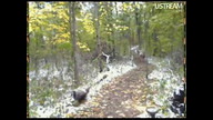 Two deer on Trail