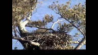 NextEra Eaglecam1:  January 28, 2012
