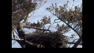 NextEra Eaglecam1: February 2, 2012