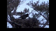 NextEra Eaglecam1: February 7, 2011