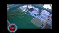 Winter the Dolphin Webcam 3/5/12 09:07AM PST