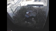 The Franklin Institute Hawk Nest www.fi.edu/hawks 3/9/12 04:07AM PST
