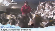 Penguin Cam Live Chat April 2, 2012