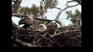 NextEra Maine Eaglecam: April 24, 2012