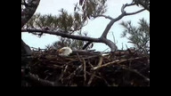 NextEra Maine Eaglecam1: April 27, 2012_1435