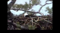 NextEra Maine Eaglecam: April 27, 2011_1705