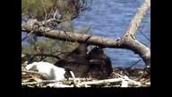 NextEra Maine Eaglecam:1 April 28, 2012_1520