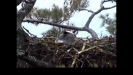 NextEra Maine Eaglecam: May 4, 2011