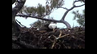 NextEra Maine Eaglecam1: May 4, 2012_1136