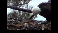 NextEra Maine Eaglecam: May, 4, 2012