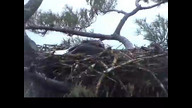 NextEra Maine Eaglecam1: May 10, 2012