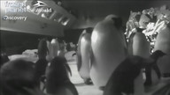 Penguin-Cam