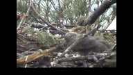 NextEra Maine Eaglecam1: May 22, 2012_1503
