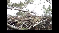 NextEra Maine Eaglecam: June 6, 2012