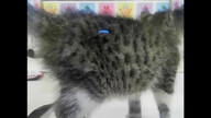 NSALA Puppy & Kitten Cam Part 1 6.07.12
