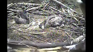 "AEF's ""Eagle Nest Cam"" # 2"