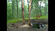 Twin Fawns!