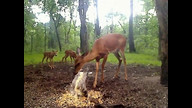 Fawns2!