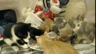 Delray Kitten Cam - Cuties eating