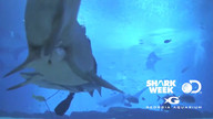 Count down to Shark Week with Ustream