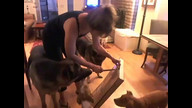 German Shepherd Rescue