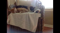 Foster Kitties: Bernard and Bess