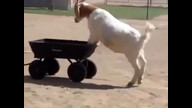 Whatever floats your goat . . .