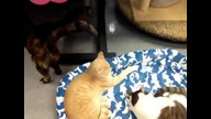 Friends of Felines Rescue Center 24/7 Kitty Cam.
