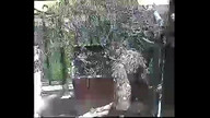 Africam Potted Plant Owl