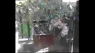 Africam Potted Plant Owl
