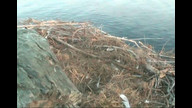 West End Bald Eagle Nest Cam 1