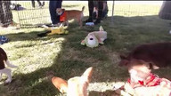 Bill Foundation Puppies Live Webcam