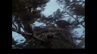 NextEra Maine Eaaglecam: March 8, 2013