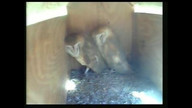 3/10/13 - 7am - Two Owls in the box for the day....
