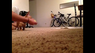 Eames puppy cam: Playing fetch