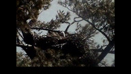 NextErra Maine Eaglecam1:  March 15, 2013