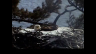 Brookfield Maien Eaglecam1: March 20, 2013_0923