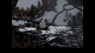 Brookfield Maine Eaglecam1: March 20, 2013_1425