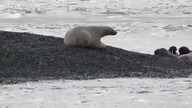 Climate change visible at the Arctic Laptev Sea