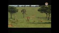 Dindir Animal National Park