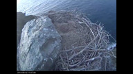 West End Bald Eagle Nest Cam 1