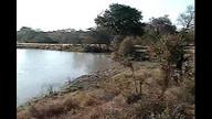 Djuma Waterhole Cam